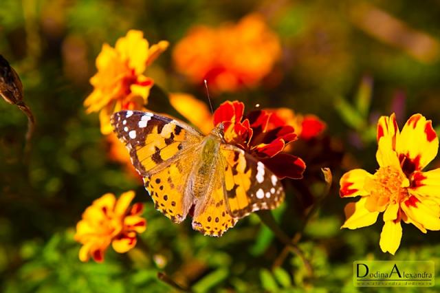 Бабочка. Фотосессия в Туапсе.